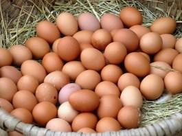 Frische Eier vom Steirerhof in Mieming. Foto: Knut Kuckel
