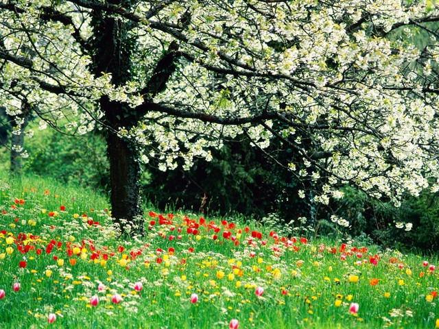 camp cu flori - primavara