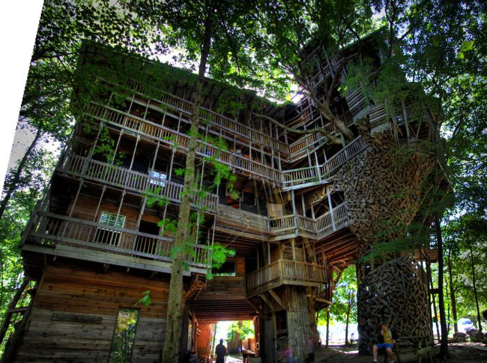 casa din copac cei mai mari copaci