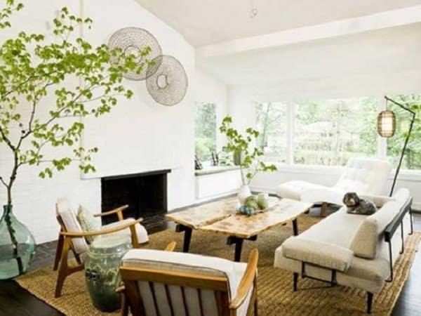 plante- decoratiuni pentru casa