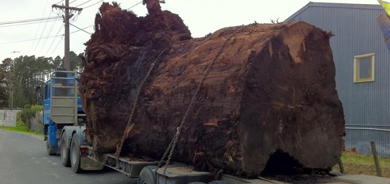 lemn de Ancient Kauri