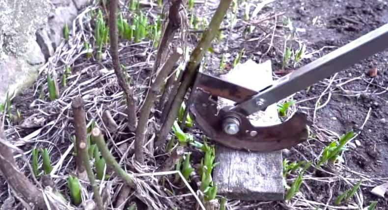 Dispozitiv de scos puieți de copac 2