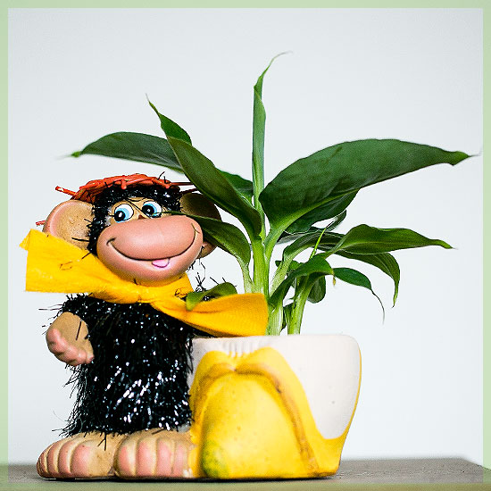 happy musa banenenpoat in monkey sierpot