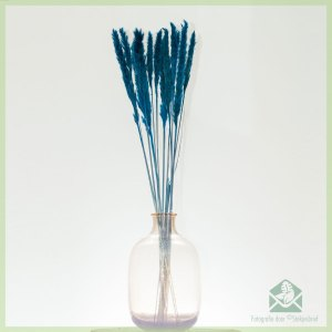 Pampas pluimen droogbloemen Ocean Blue 75 cm x 10stk