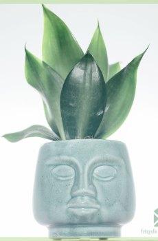 Dummdumm mint plantenpot bloempot sierpot 7 cm kopen