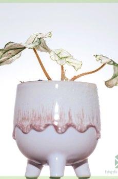 Gomez plantenpot bloempot sierpot 6 cm kopen