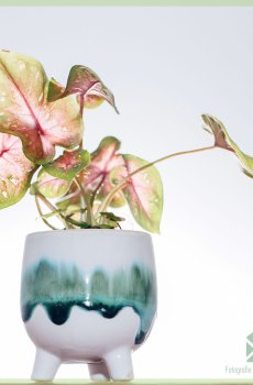 Morticia plantenpot bloempot sierpot 6 cm