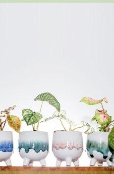 Serie Felicia Pugsley Morticia Gomez sierpotten plantenpotten bloempotten kopen