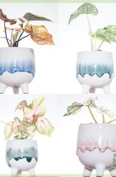 Serie Felicia Pugsley Morticia Gomez bloempotten sieroptten plantenpotten 6cm kopen