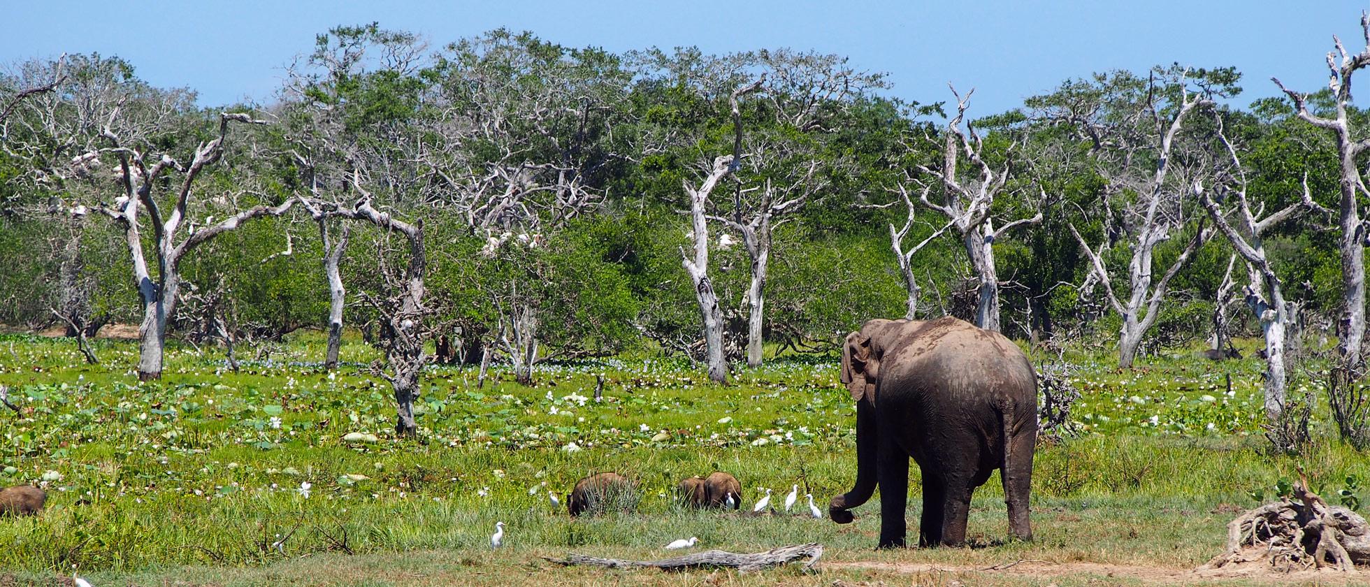 Fotoreportage Yala National Park: Een top safari!