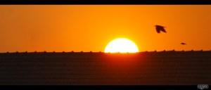 Bird Over Sunset by Scorsagra