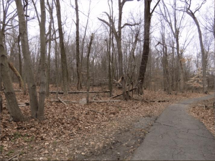 AWR Path cracks