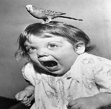 Image result for fear of birds