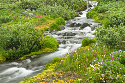 Image result for creek stream