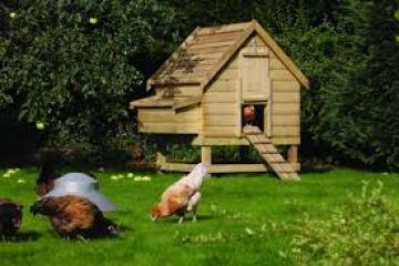 elevated-chicken-coop