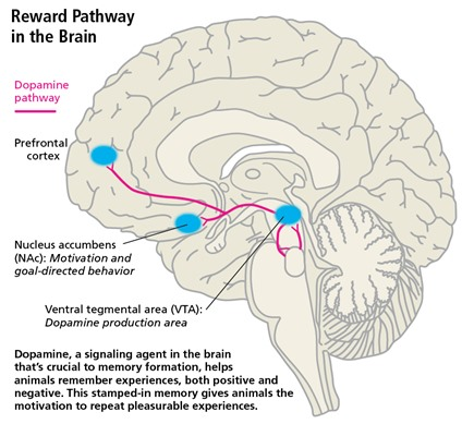 Certain drugs interact with dopamine pathway
