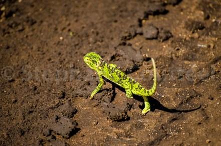 Biodiversité presque écrasée