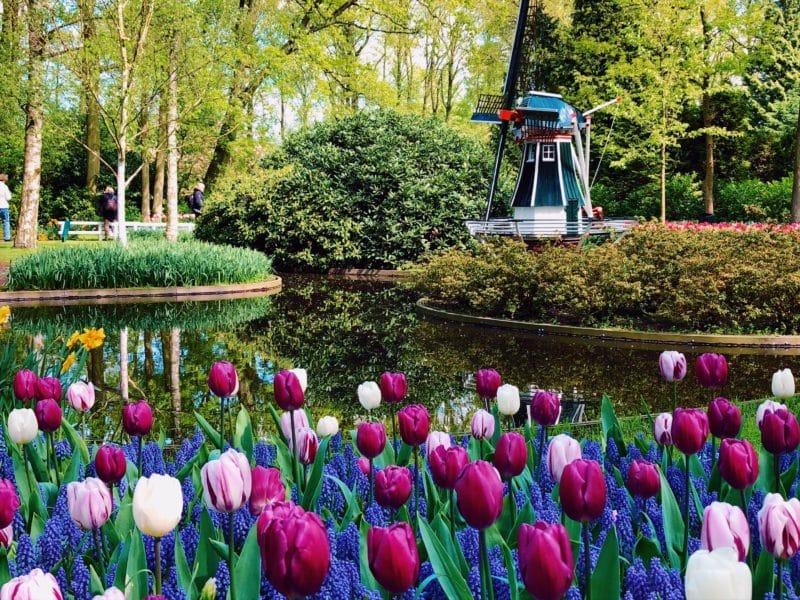 Highlights of Keukenhof Gardens