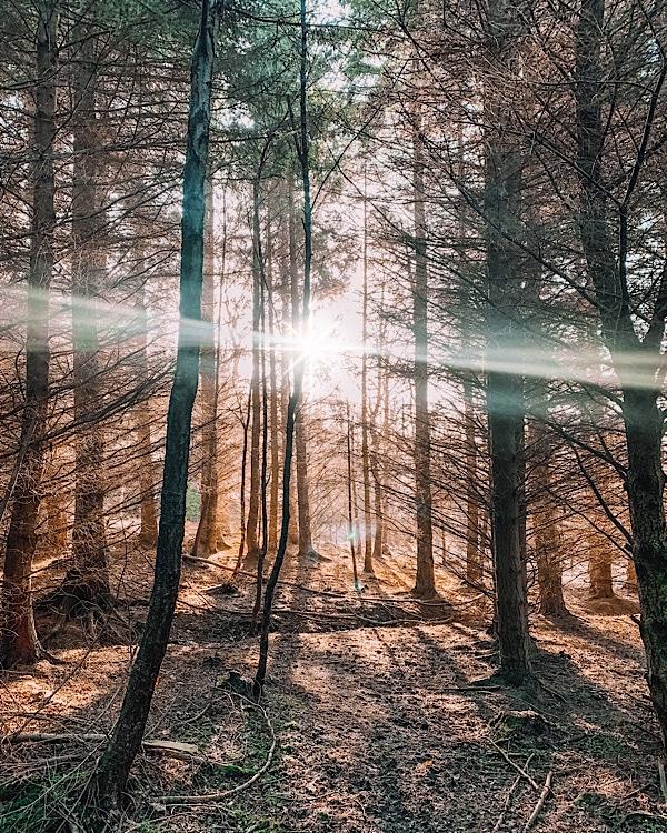 Percy wood Northumberland