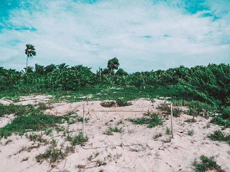 turtle nest tulum