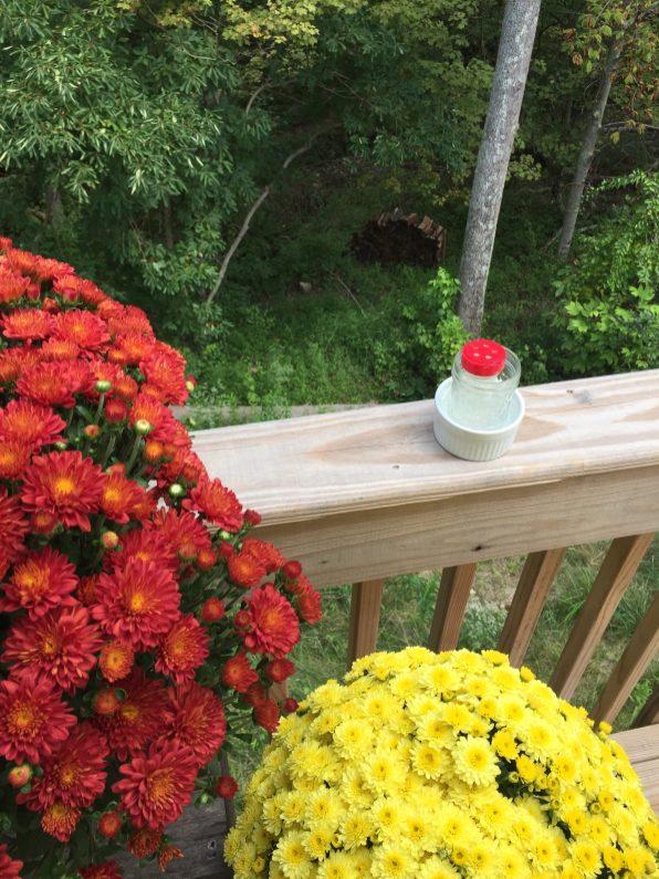 My DIY hummingbird feeder, reusing an old spice jar. The hummingbirds LOVED it!