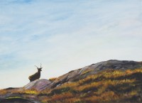 Hebridean Stag, Isle of Harris Stephen Murray