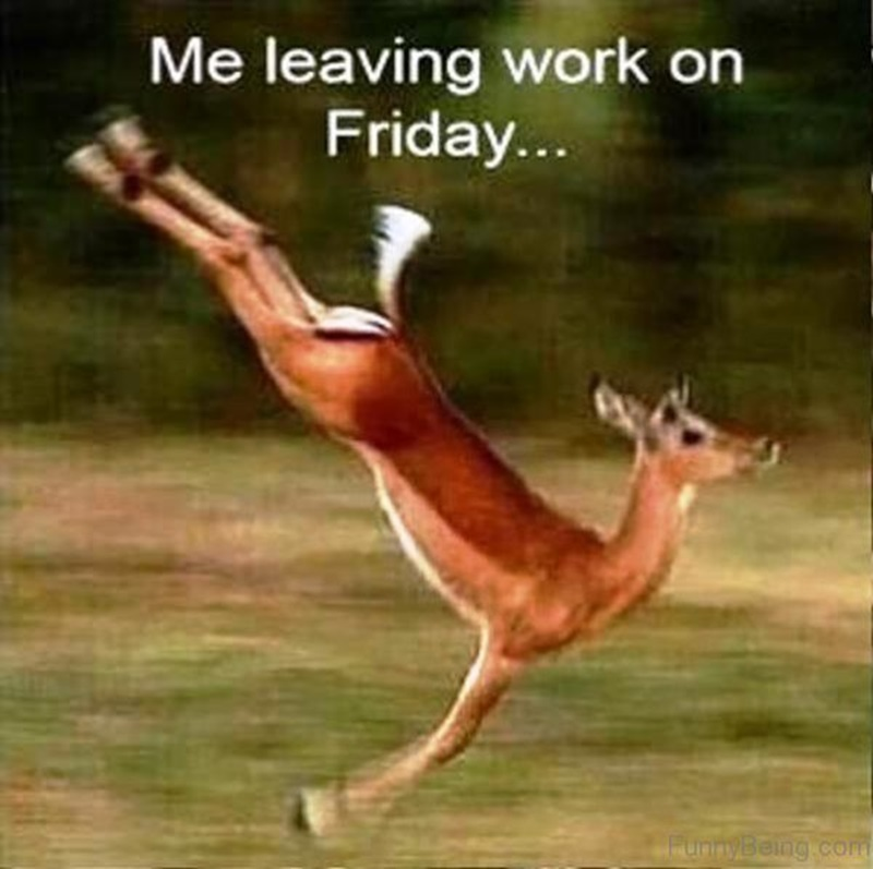 90 Friday Memes That Will Supplement Your Friday Feels