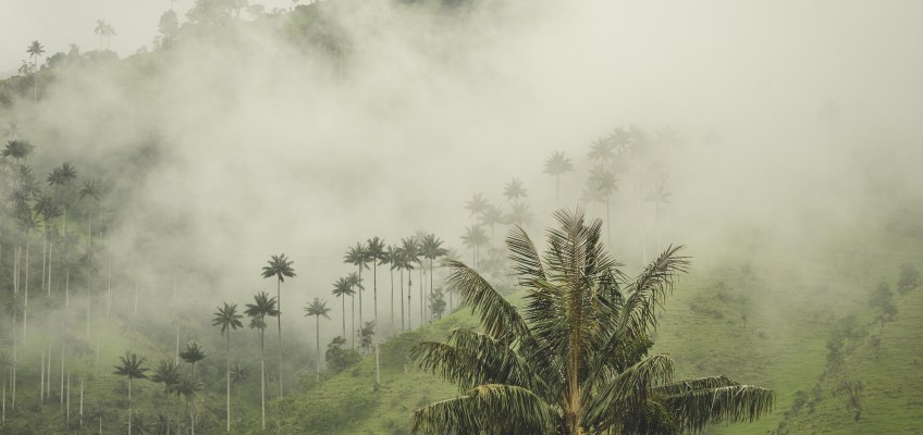 Colombia – next to giant palm trees from Ibagué to Salento