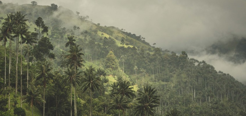Wax palms Colombia – video story
