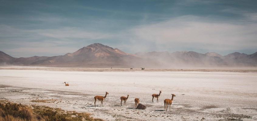 Ruta de las Vicuñas in Chile