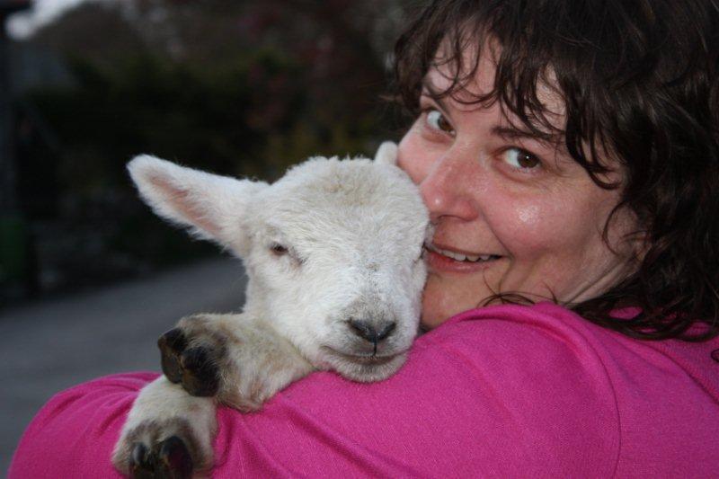lamb-cuddle