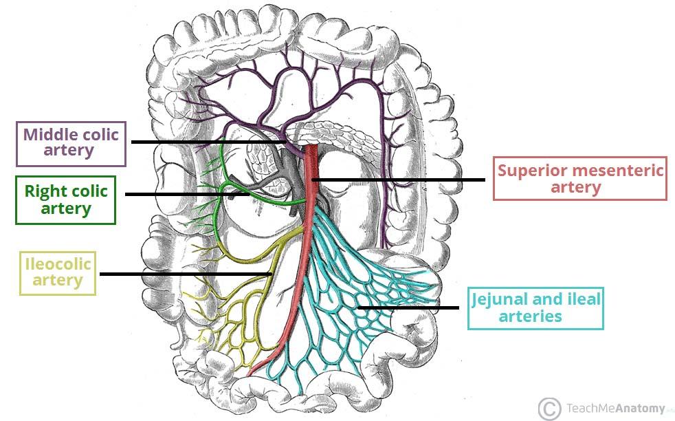 ischemic colitis – stepwards, Skeleton