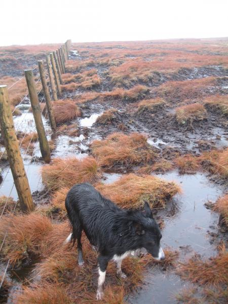 Peat, peat and more peat, most of it wet though