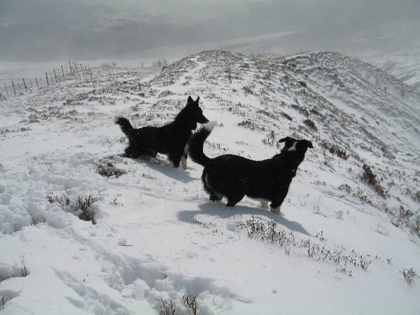 Pippa and Cloggy take time out before the next blizzard