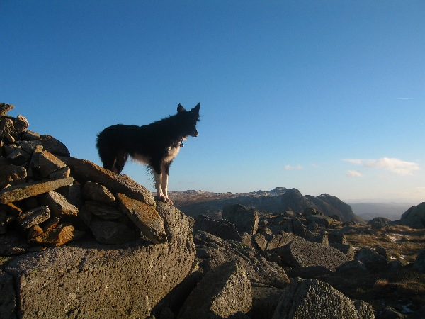Pippa admiring the view to the Langdale Pikes from Rossett Pike