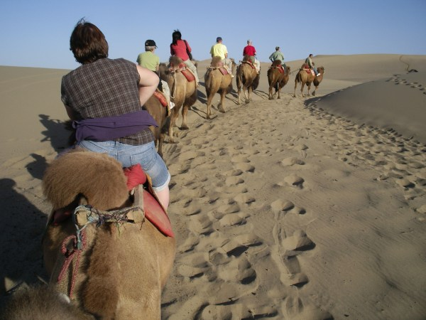 Camel squashing in the Turfan depression