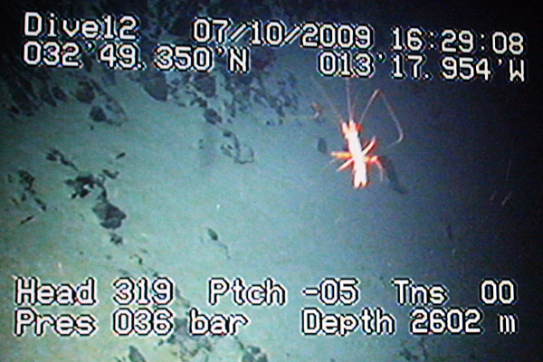 A shrimp swims past the steep slopes of the side of the seamount, in this video image from Hybis.