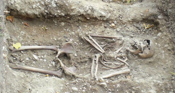 A skeleton in one of the trenches at the Polesworth Abbey archaeological dig.