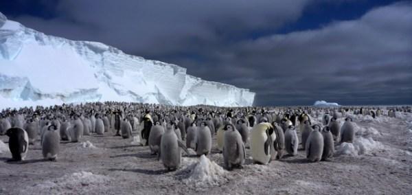 Penguins at Windy Bay