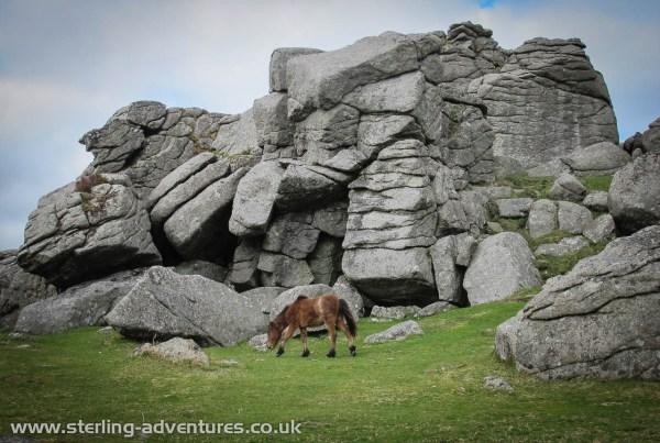 A pony at Bonehill on Dartmoor