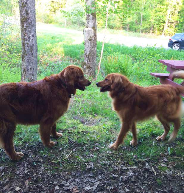 Dog Friendly Resorts in New England