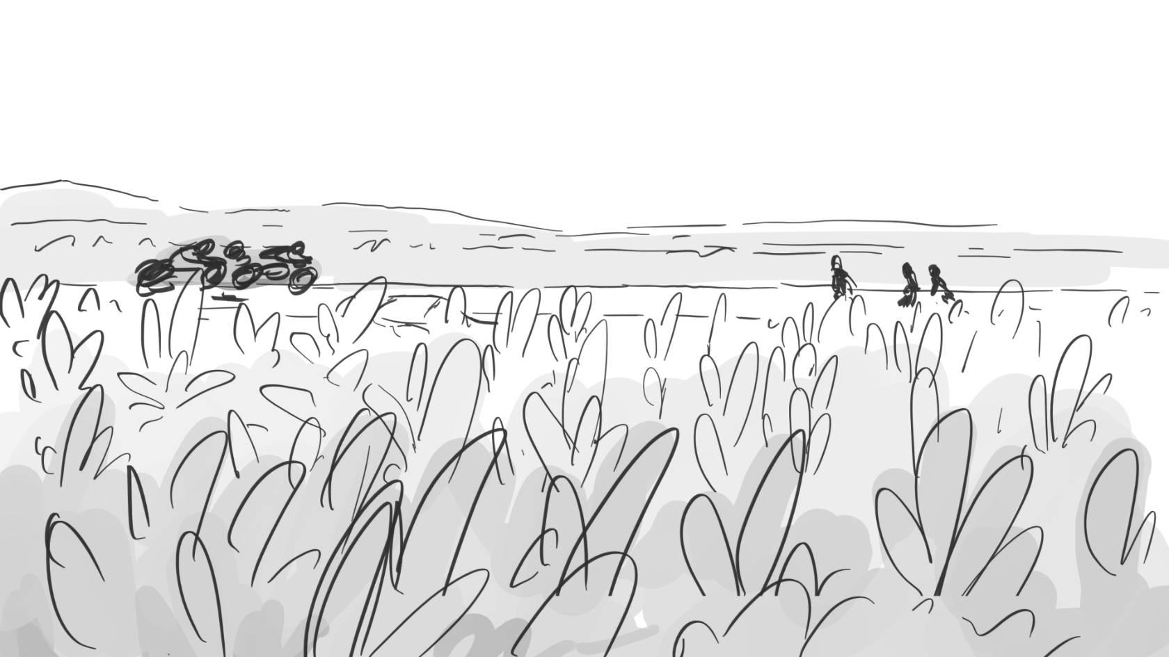 cornfield  zzwjie