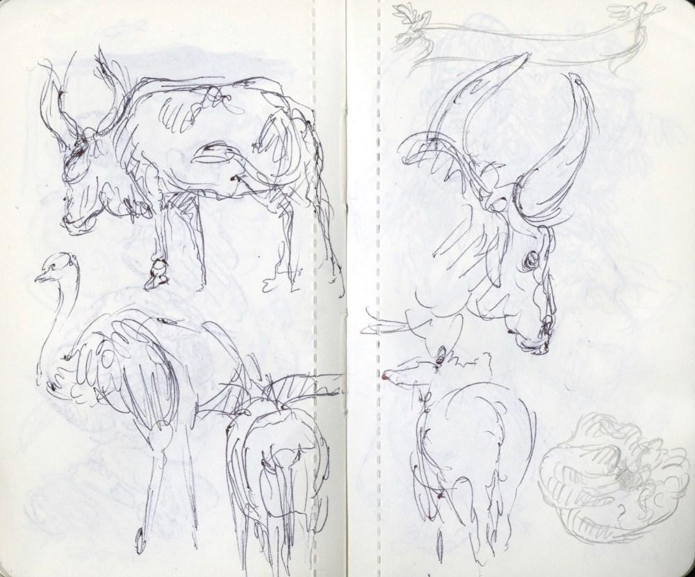 animal drawings at the zoo