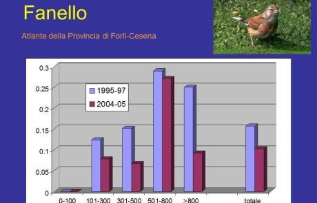 Trend Fanello