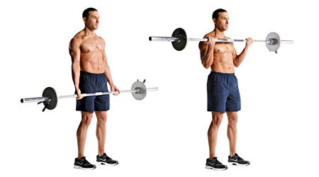 Image result for barbell bicep curl