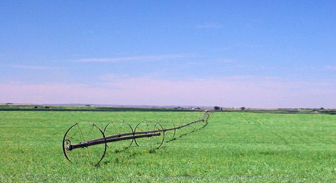 wheelline sprinkler in green field
