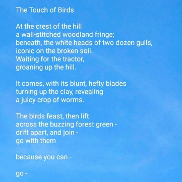 Poetry Up in the Air: The Touch of Birds