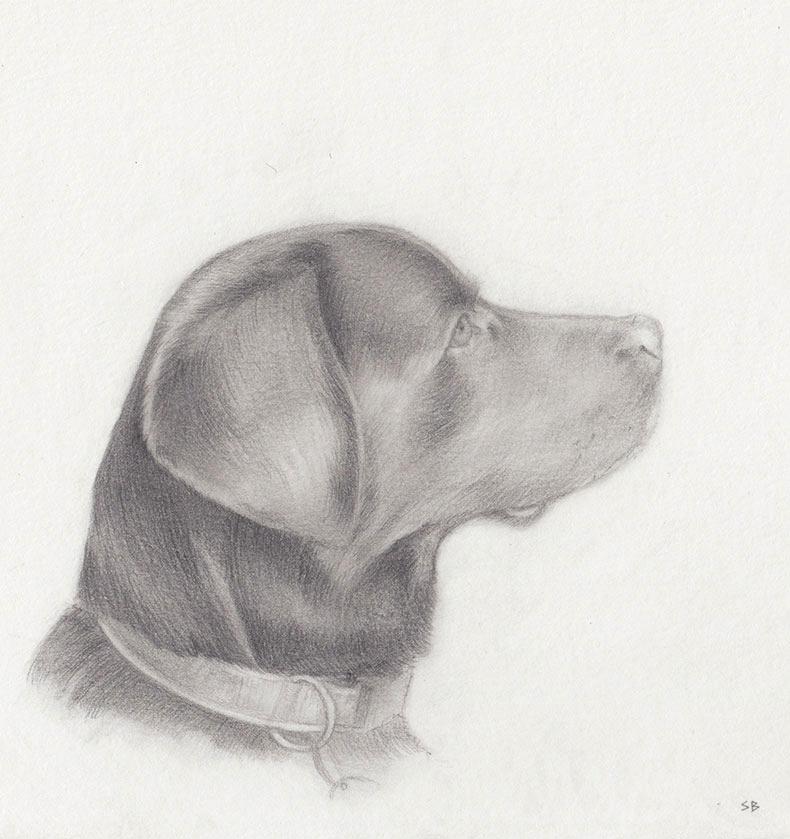 alucia-dog-pencil-portrait-steve-beadle-art