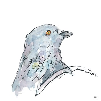 pigeon-pen-ink-watercolour-stevebeadleart