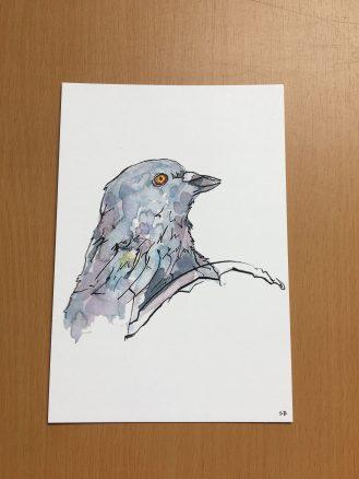 pigeon-postcard-preview-steve-beadle-art